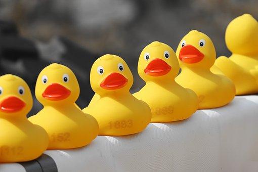 duck-meet-4127701__340